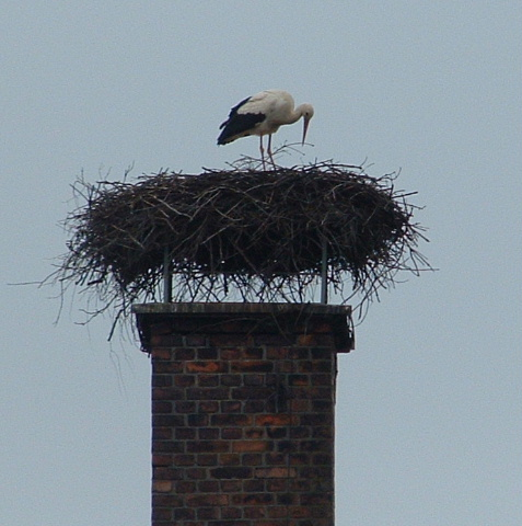 storch 2010