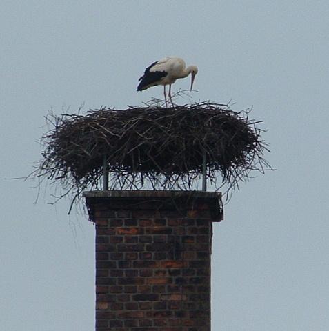 Der Storch ist da!