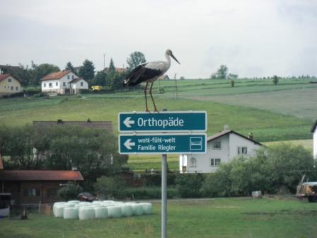 Storch auf Wegweiser